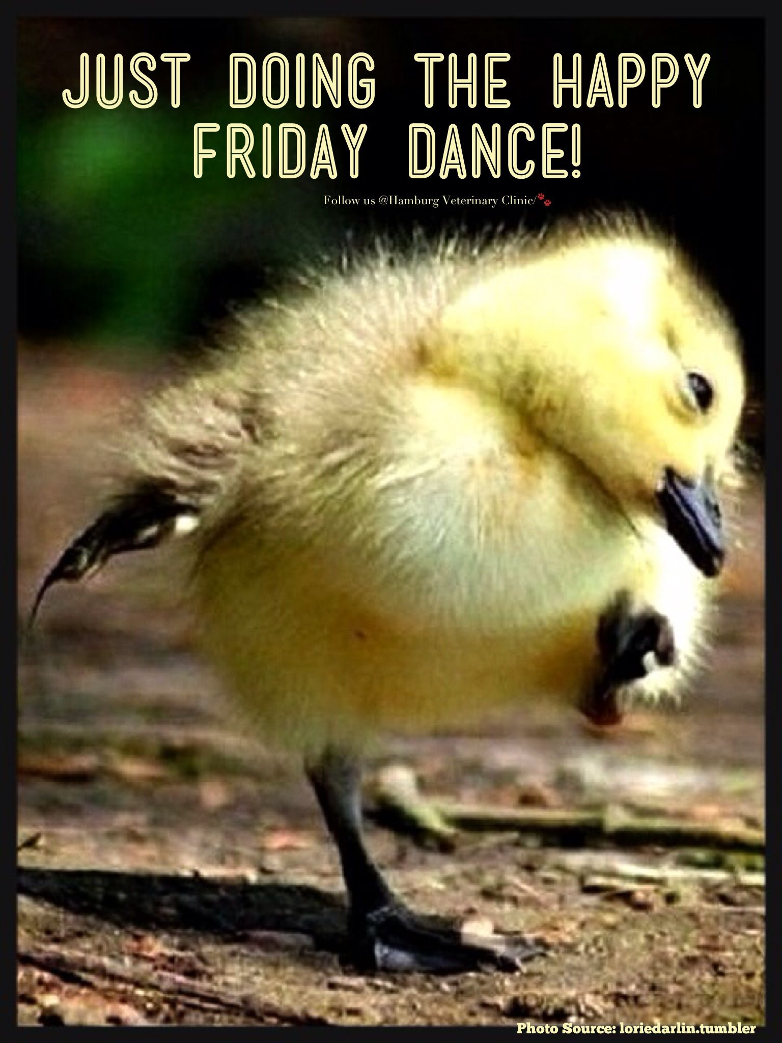 Friday is here Happiness Animal humor Cute duckling