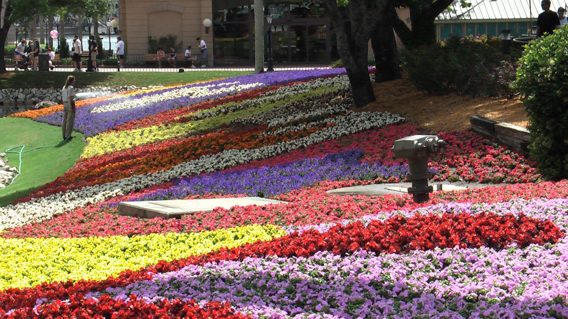 Flowers Gardens Epcot Landscapes Beautiful HD Wallpapers