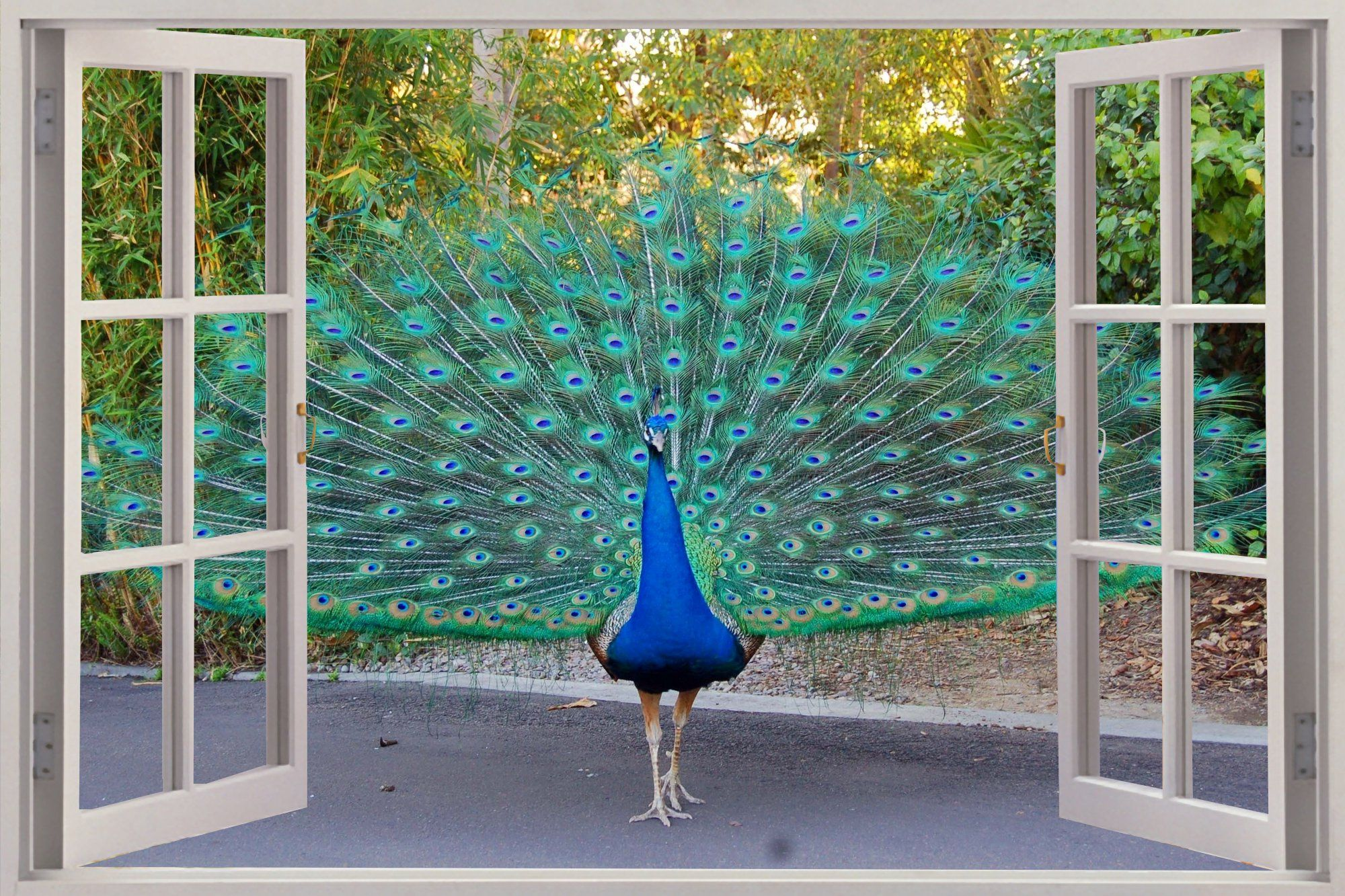 Details about 3D Window View Beautiful Peacock Wall