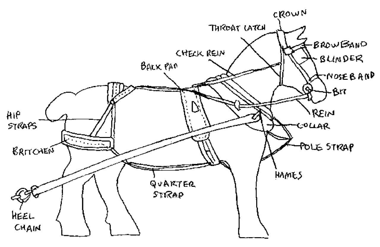 Parts Of A Horse Harness Diagram Guide To Horse Training And Handling
