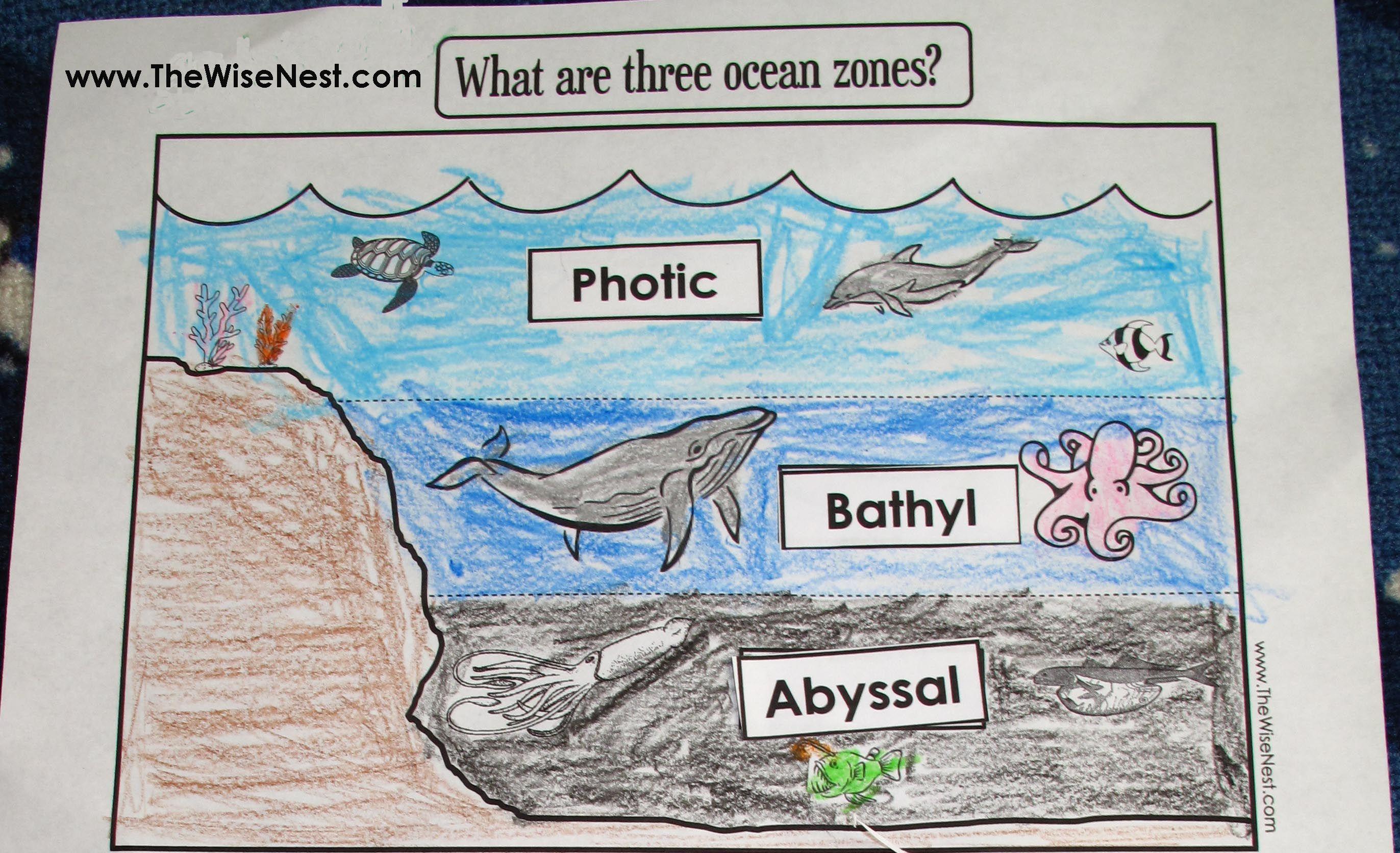 Week 19 Science Ocean Zones