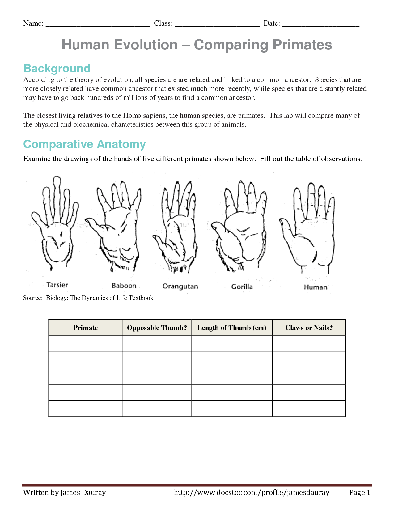 Worksheet Comparative Anatomy Worksheet Grass Fedjp Worksheet Study Site