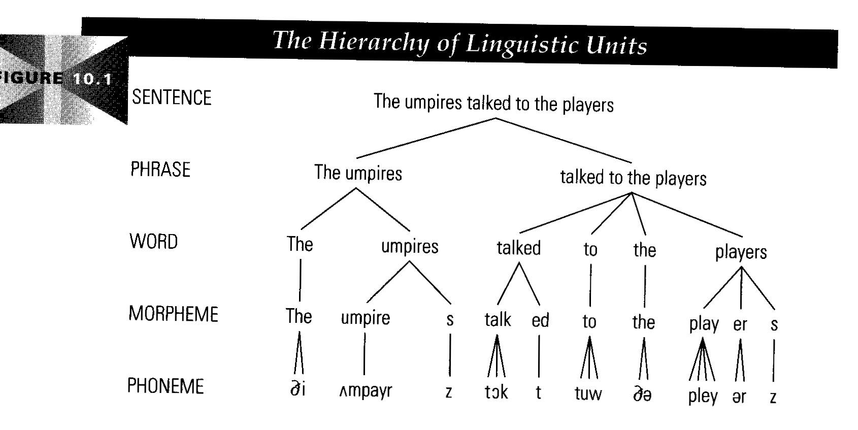 Linguistic Phonology Comparing Both Morphology And