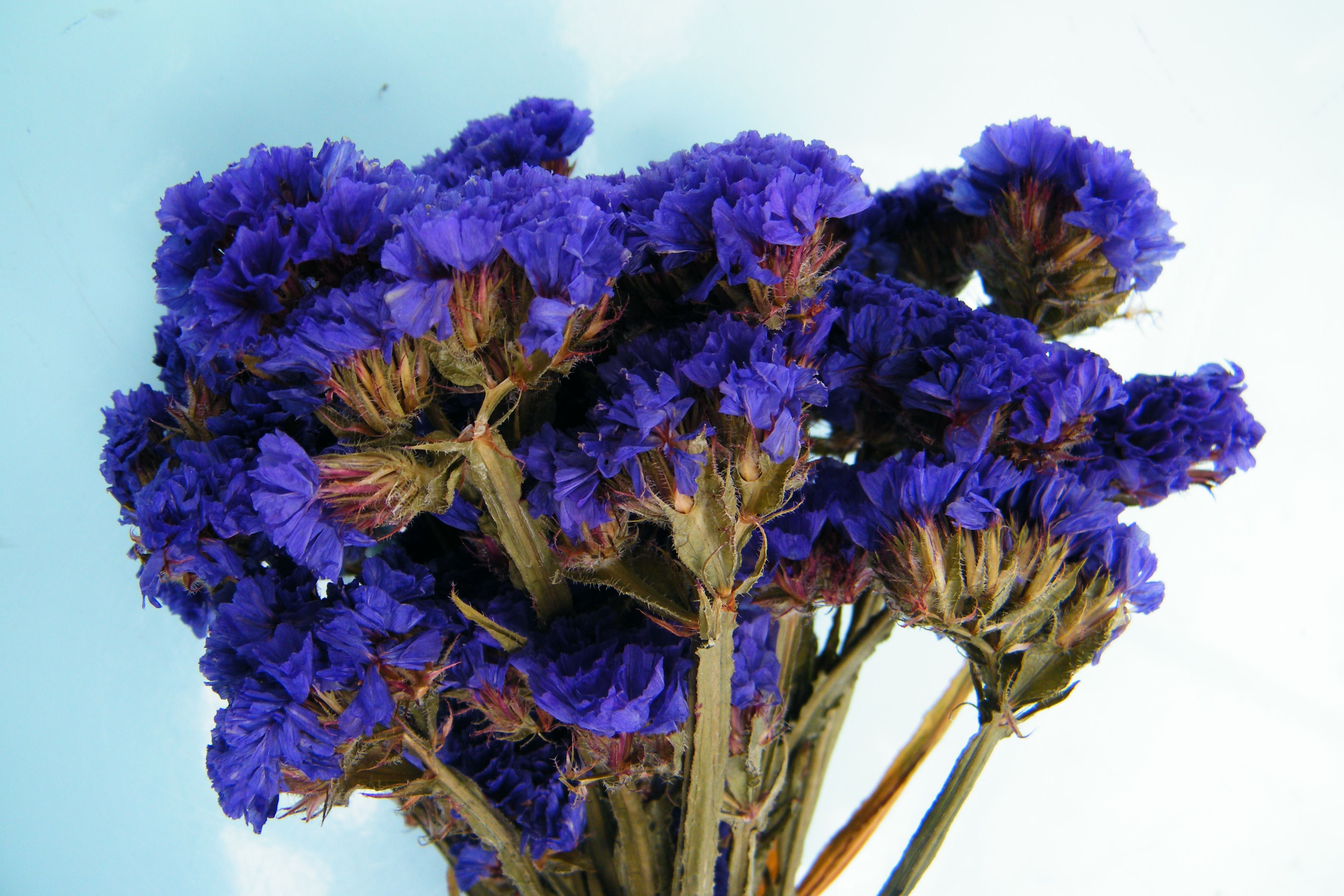 Dried flower bunches modern and traditional from Daisy