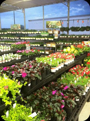 Garden Center at Walmart SC_Walmart_Board5 Pinterest