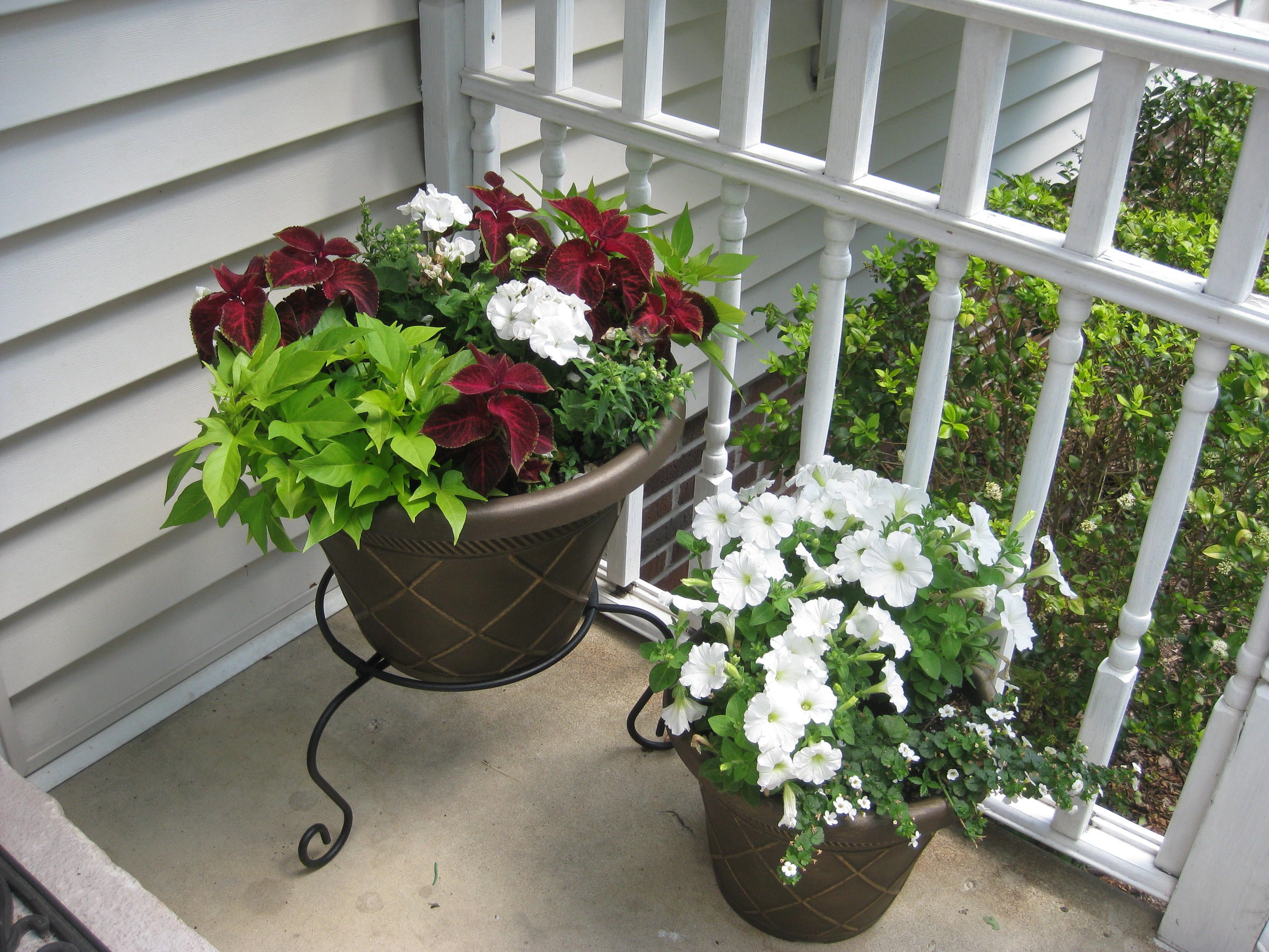 My front porch flower pots, assorted annuals. Gardens