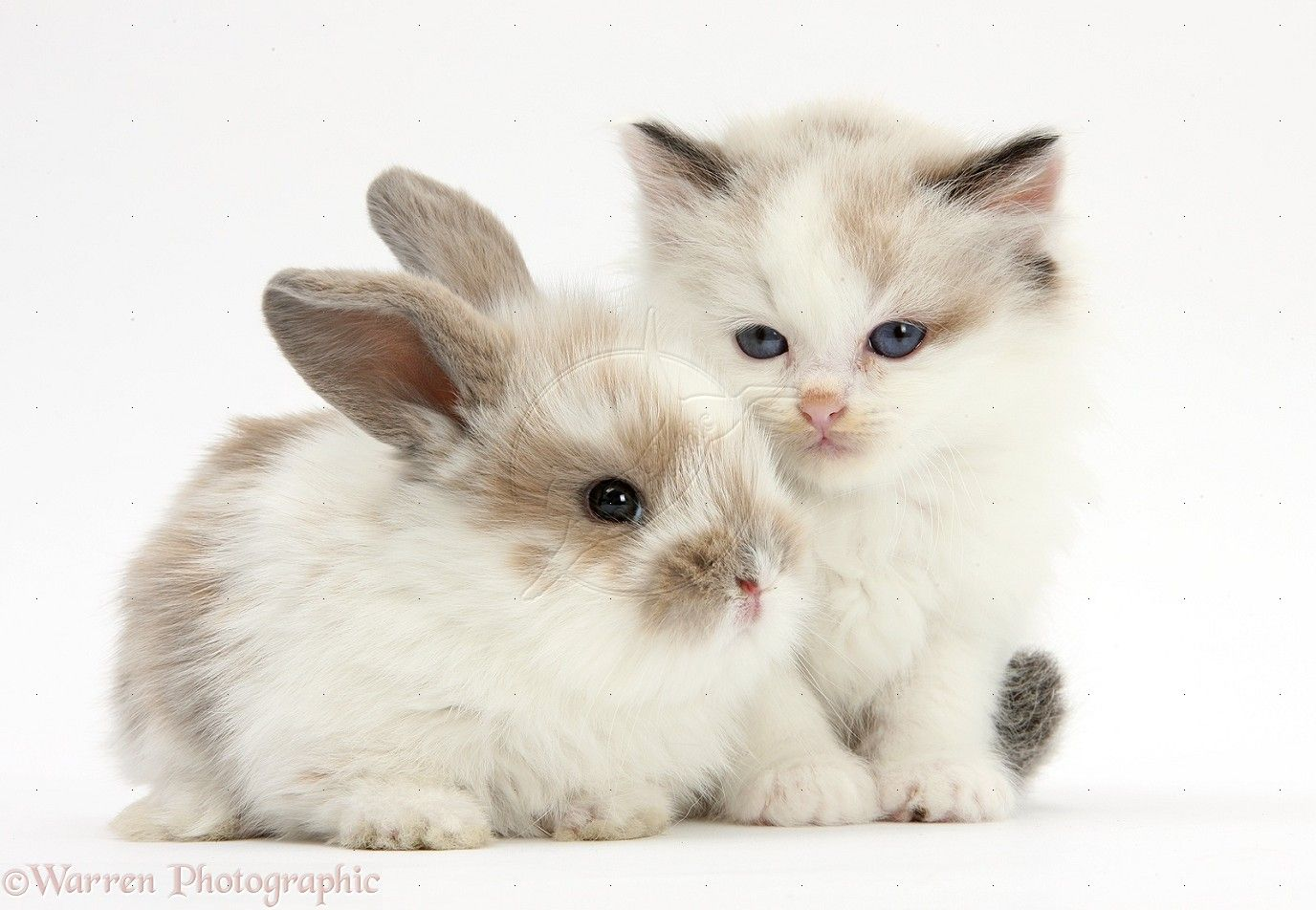 cute rabbit and kitten Google Search Cute Animals