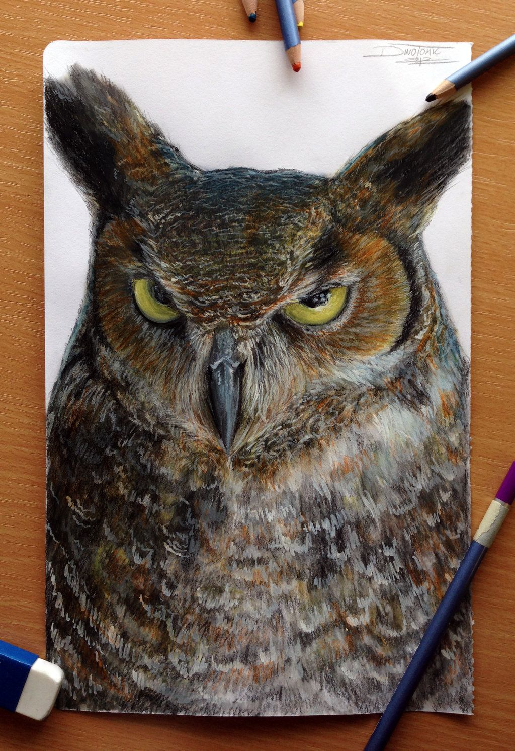 Owl Color Pencil Drawing by on