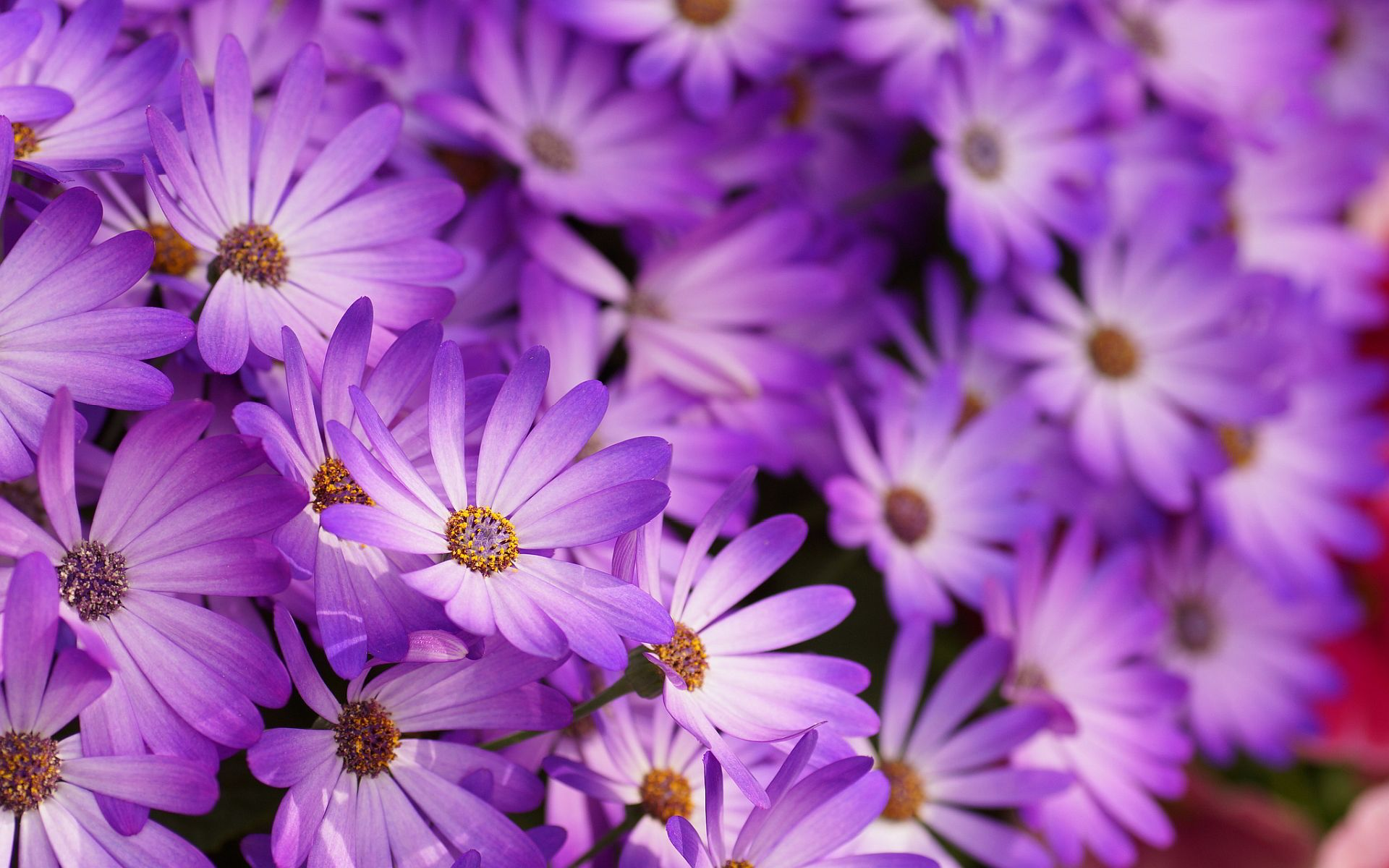 purple flower pattern wallpaper 396 Hd Wallpaper, Blue
