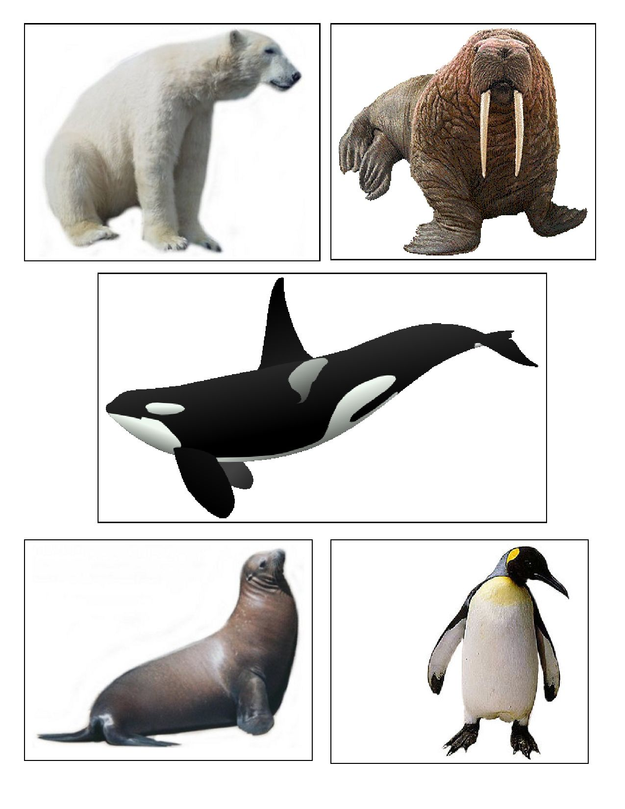 Arctic Animal Cards Can Be Used For Matching And Memory