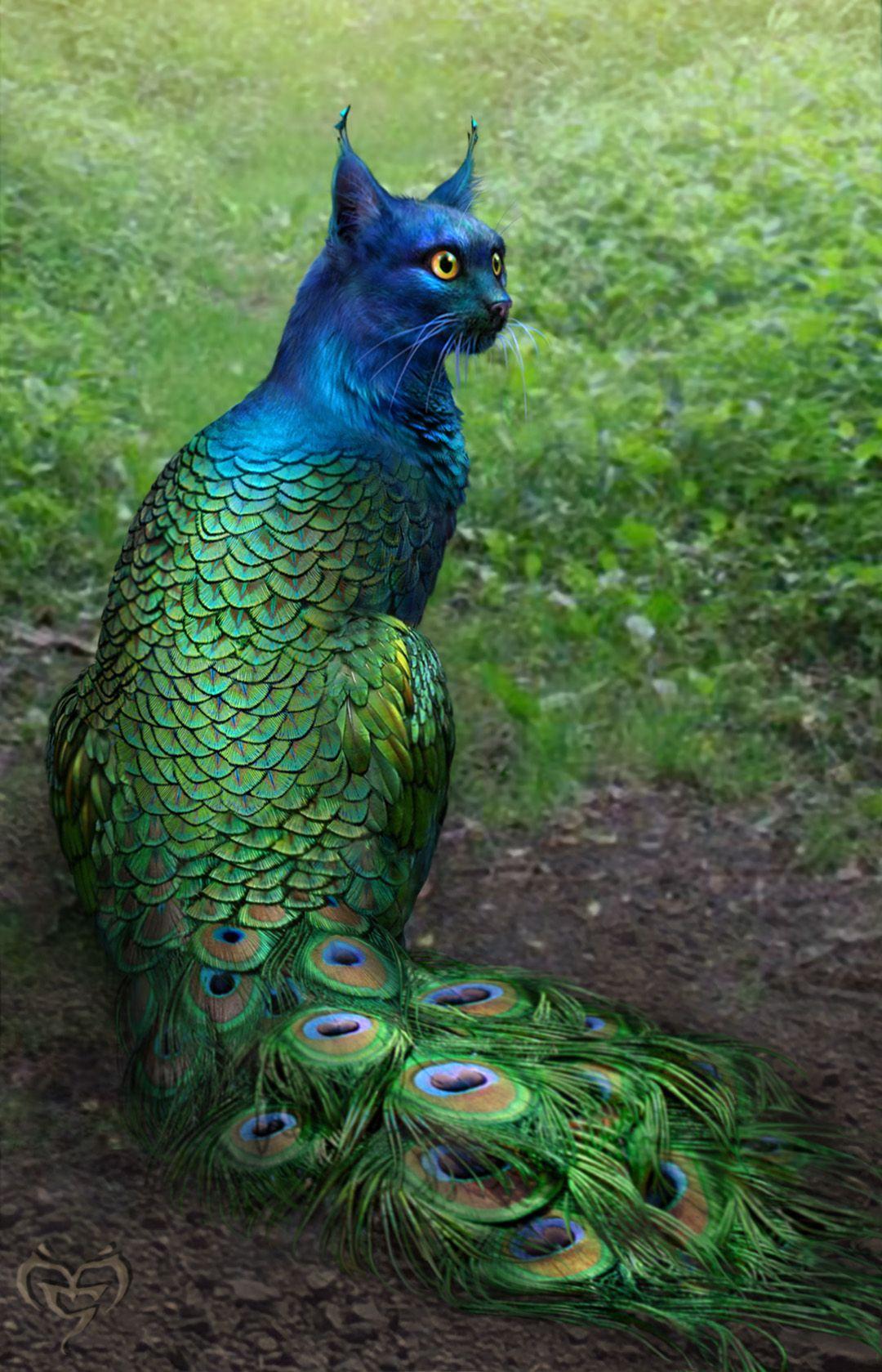 Hybrid peacock cat! Tripping Balls Pinterest
