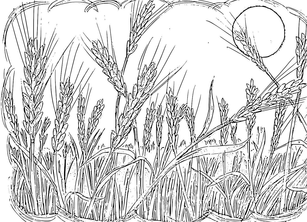 Sower Wheat Coloring 1 280 926 Pixels