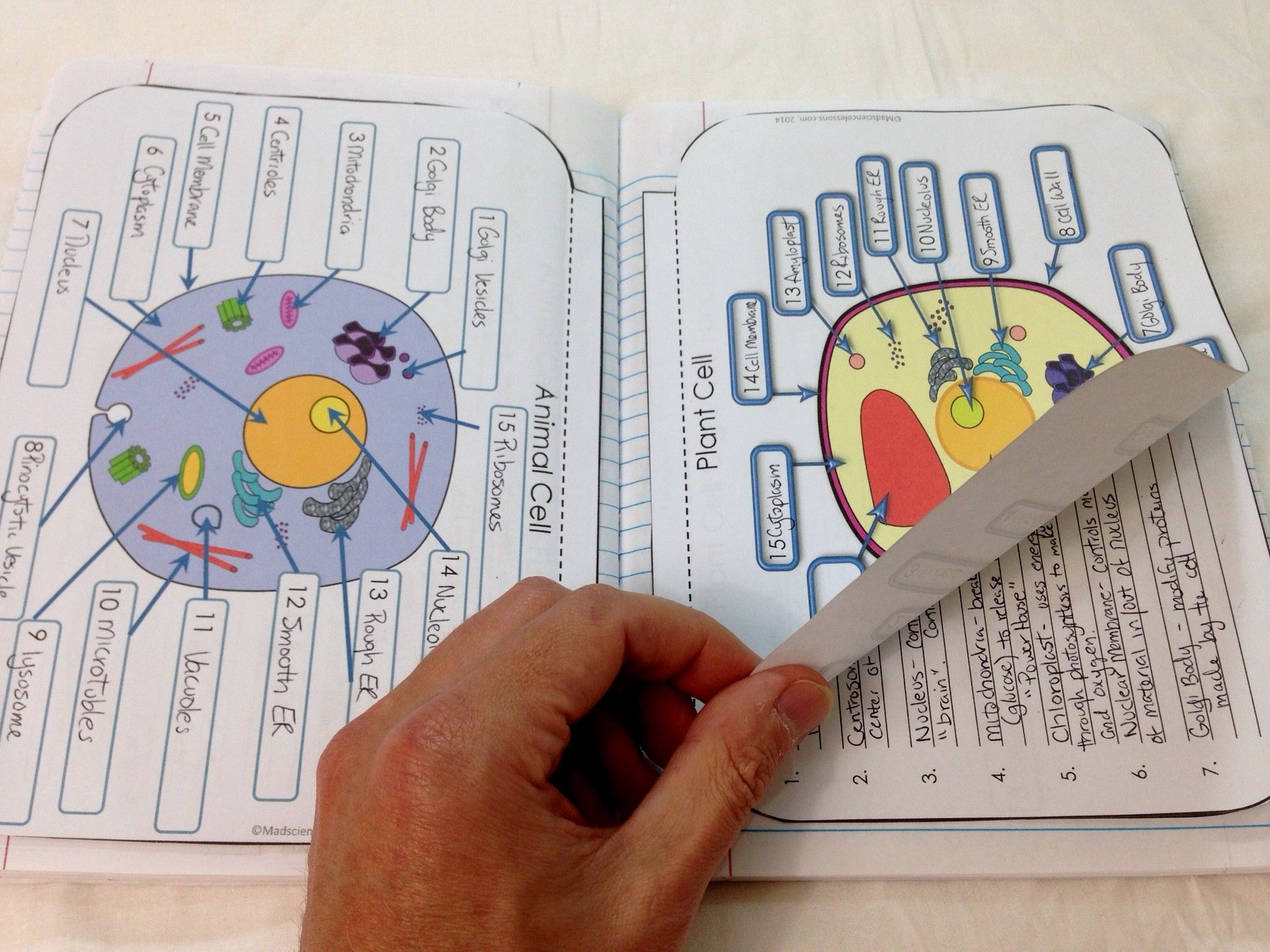 Plant And Animal Cell Flip Book