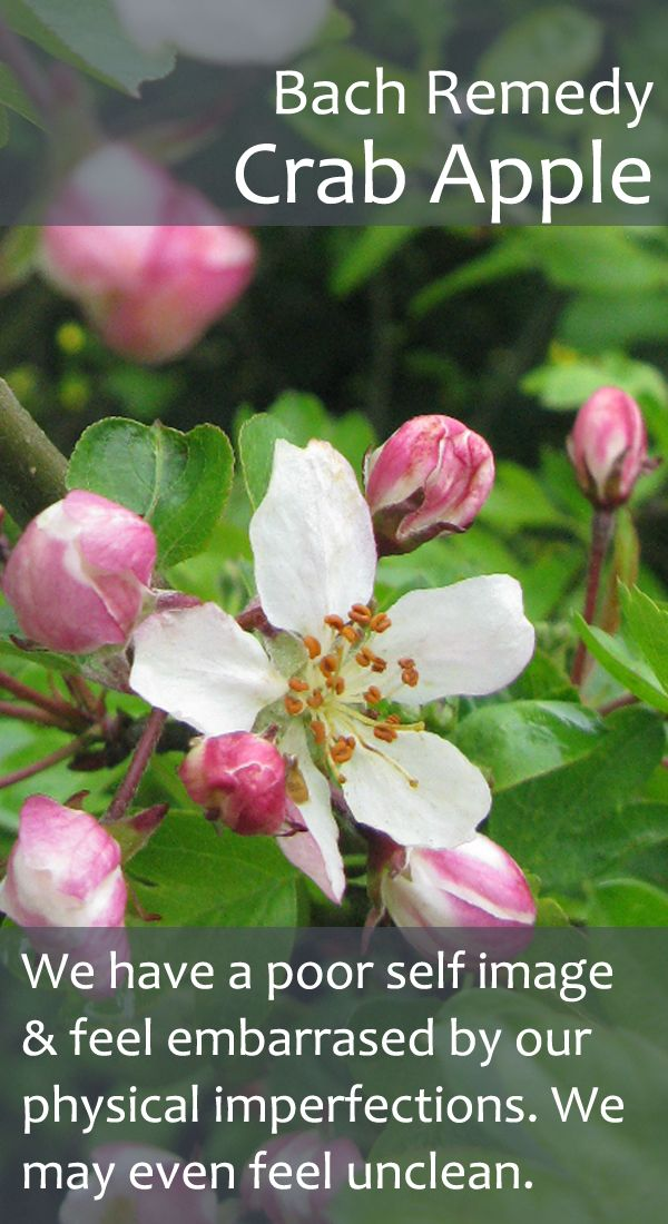 Bach Flower Remedy Crab Apple Also useful when we feel
