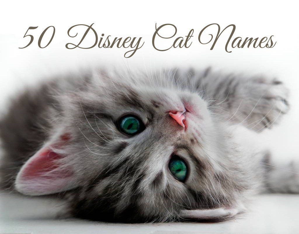 50 Disney Cat Names Disney cats, Cat and Cat lovers