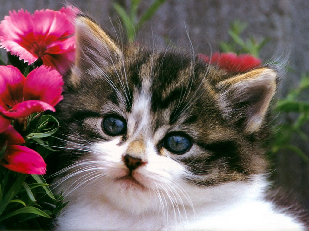 kittensplaying Cats Wallpapers Cute Cat And Kitten Cats