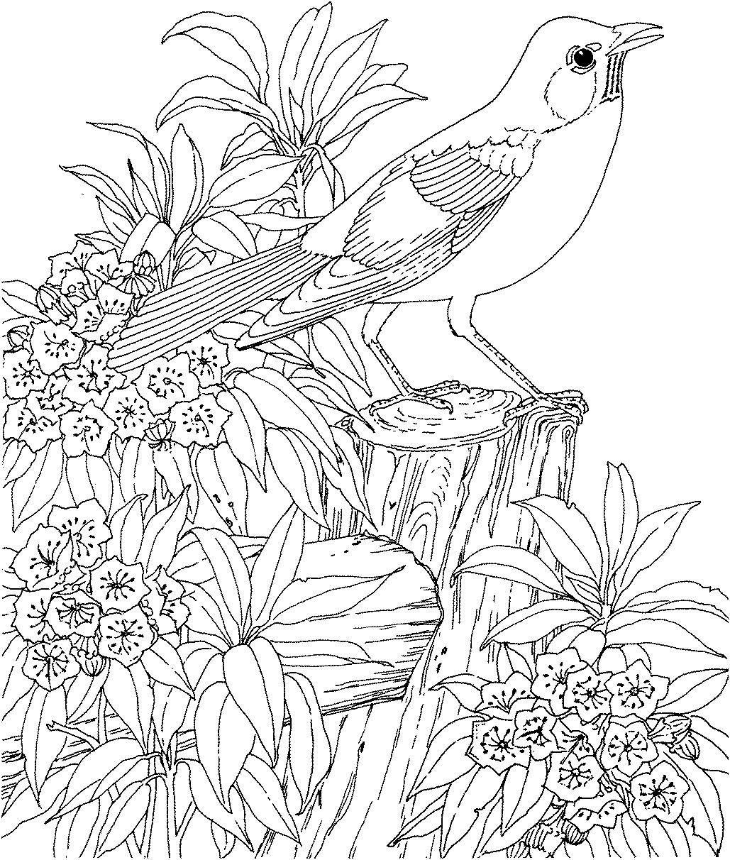 Red Cardinal and Dogwood Blossom North Carolina Bird and Flower ... | 1212x1029