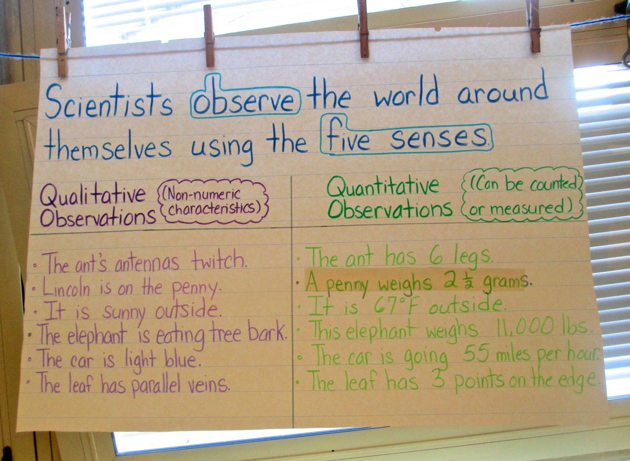Mystery Bags To Develop Observation And Inference Skills