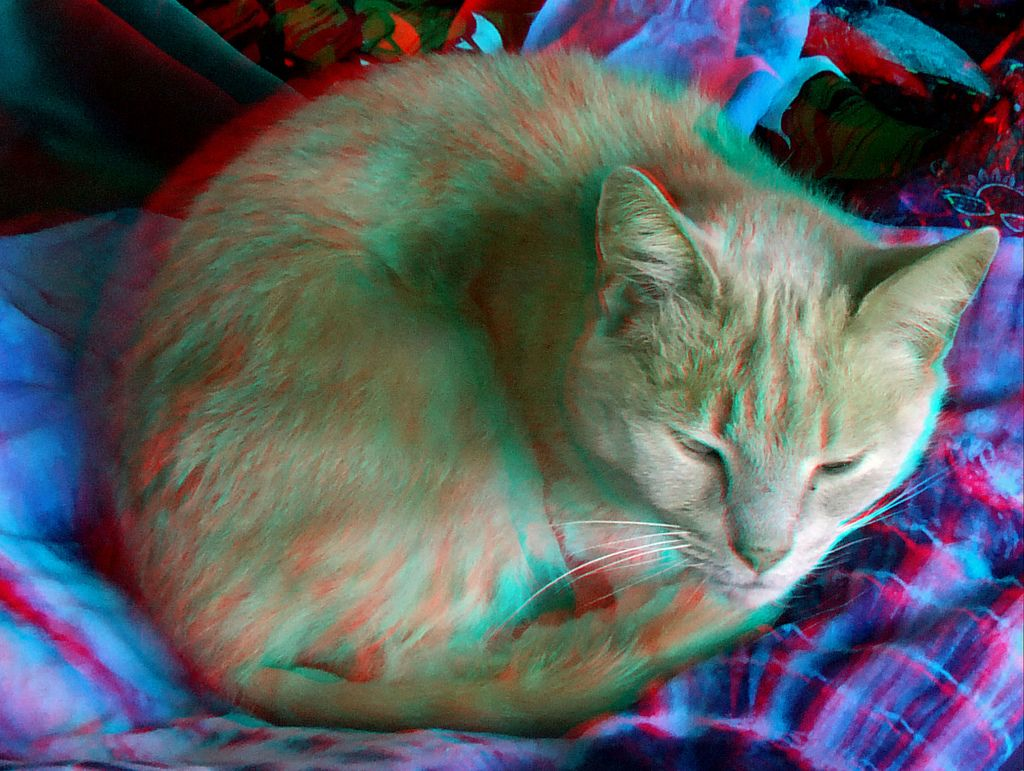 Animals in anaglyph 3D Cat red blue glasses to view 3d