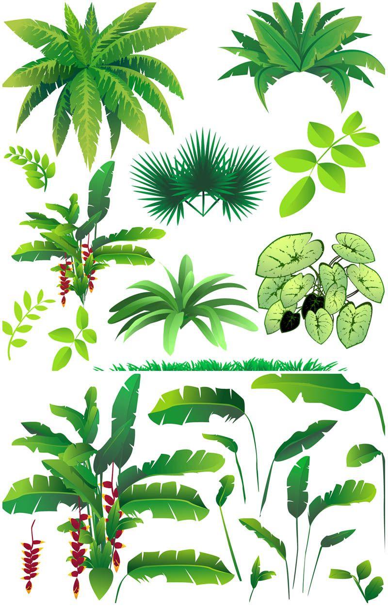 Rainforest plants vector Vector Graphics Blog Džungle
