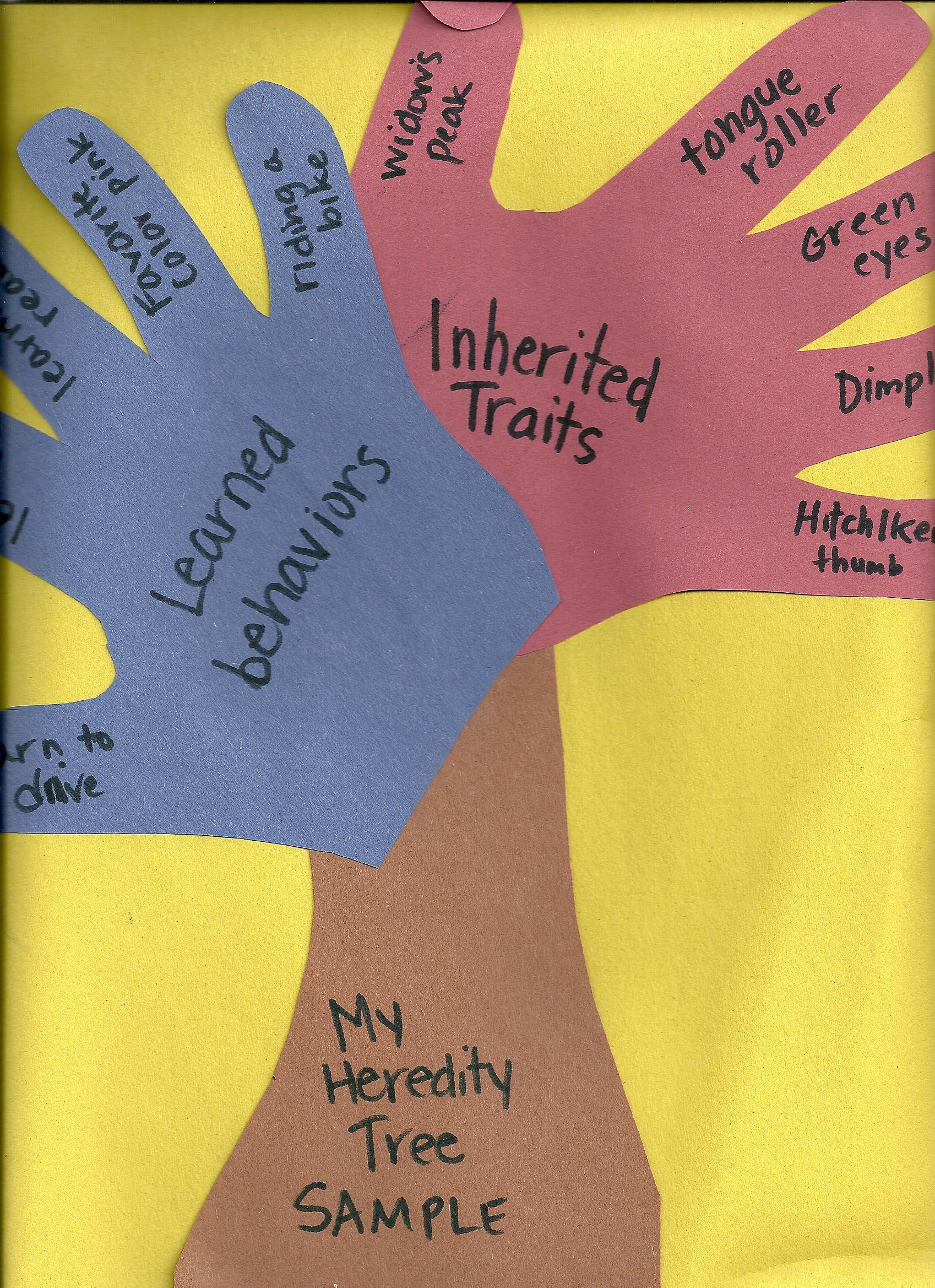 Heredity Tree Fantastic For Student Side Of Science