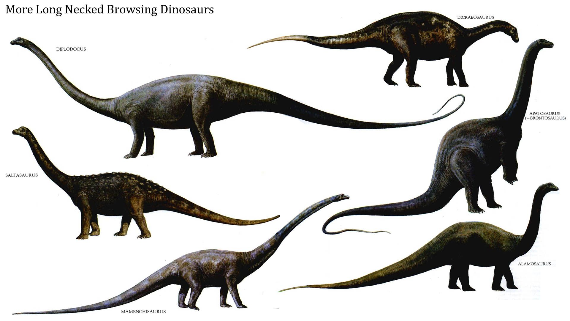 dinosaurs Google Search prehistoric animals
