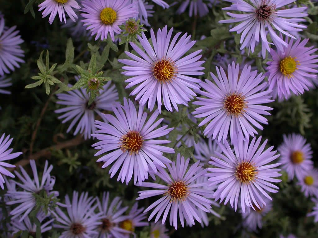 36 Awesome purple flowers names images purple flowers