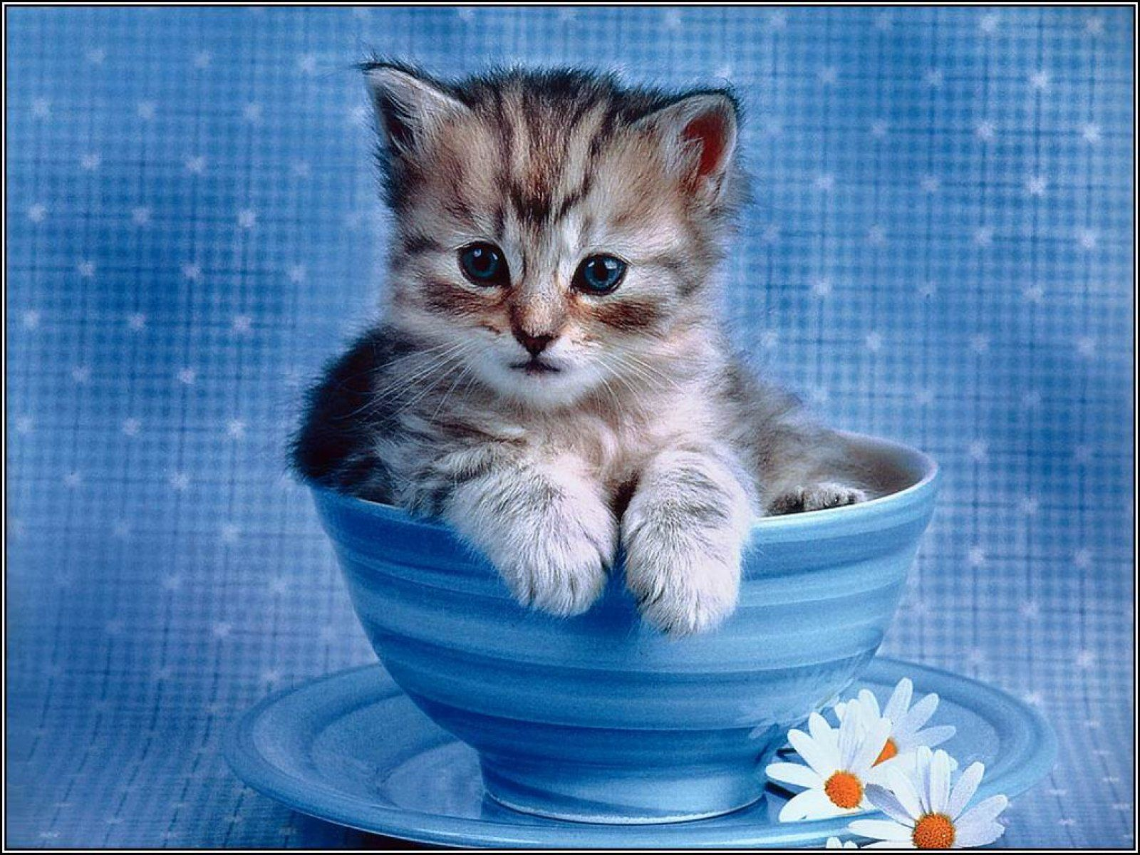 cute baby cats wallpapers group 1920×1200 cats images wallpapers