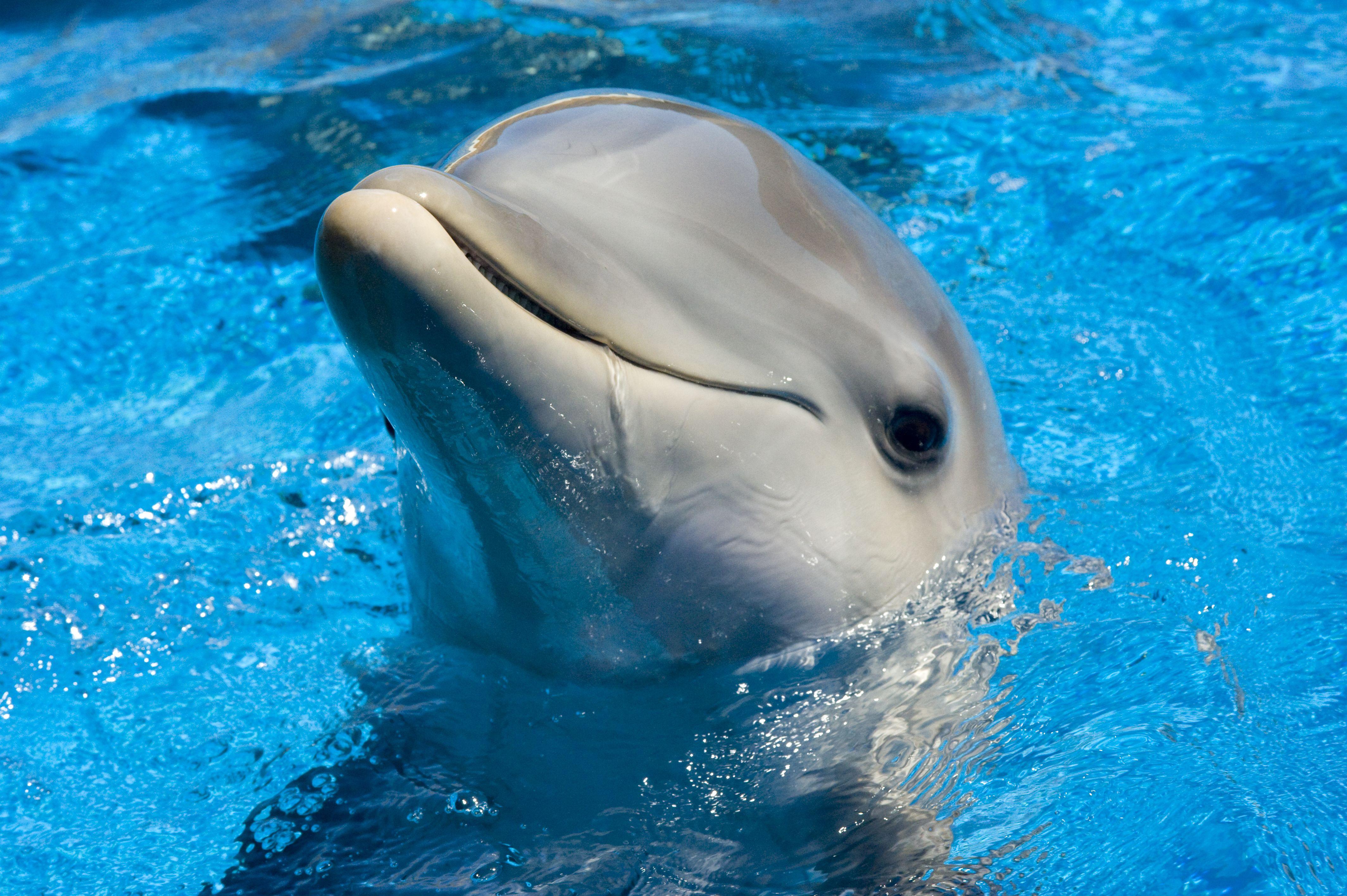 Cute dolphin Sea Life Pinterest Dolphins animal