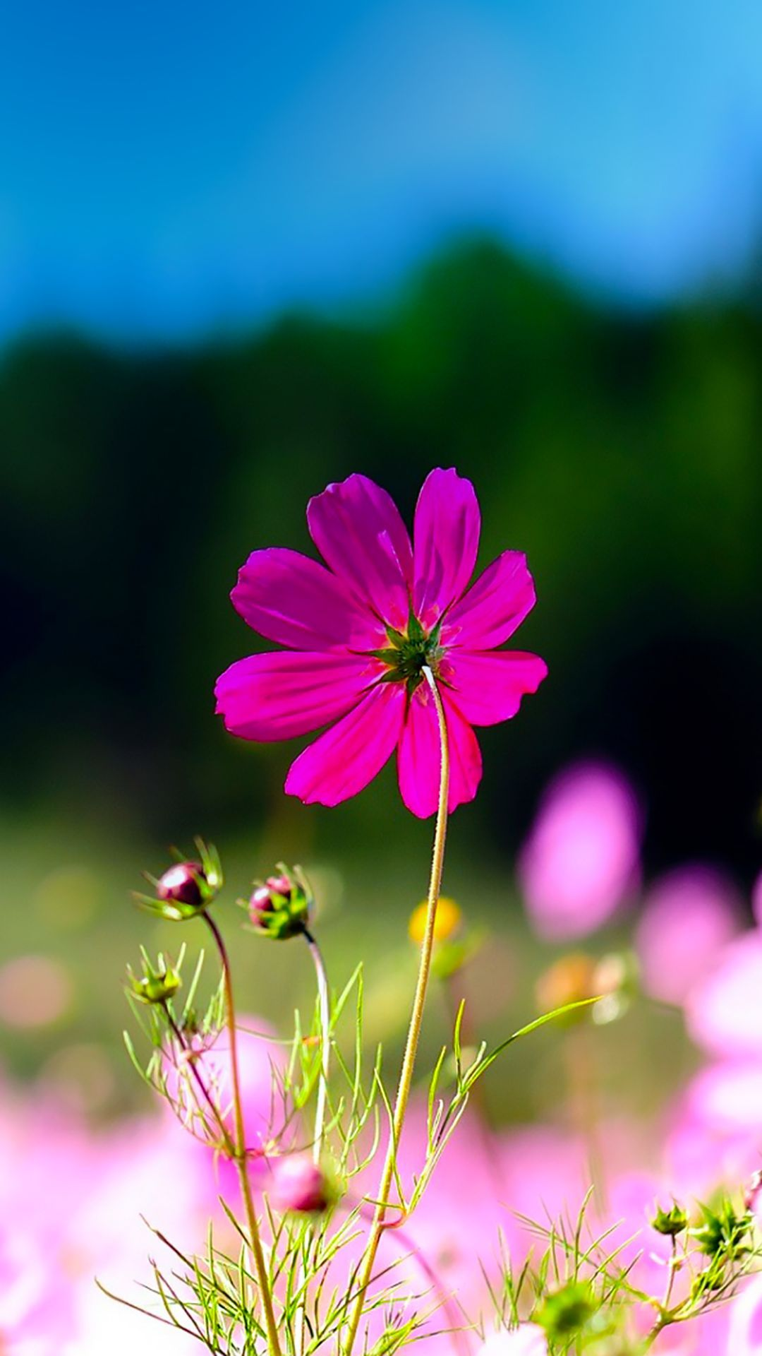 TAP AND GET THE FREE APP! Art Creative Flower Nature Macro
