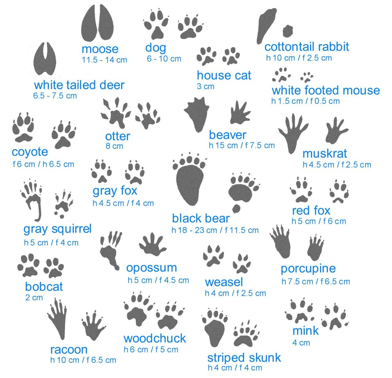 Identify The Critter That S Making Tracks In Your Garden