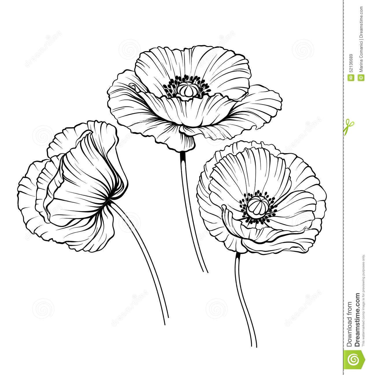 Poppies Drawing