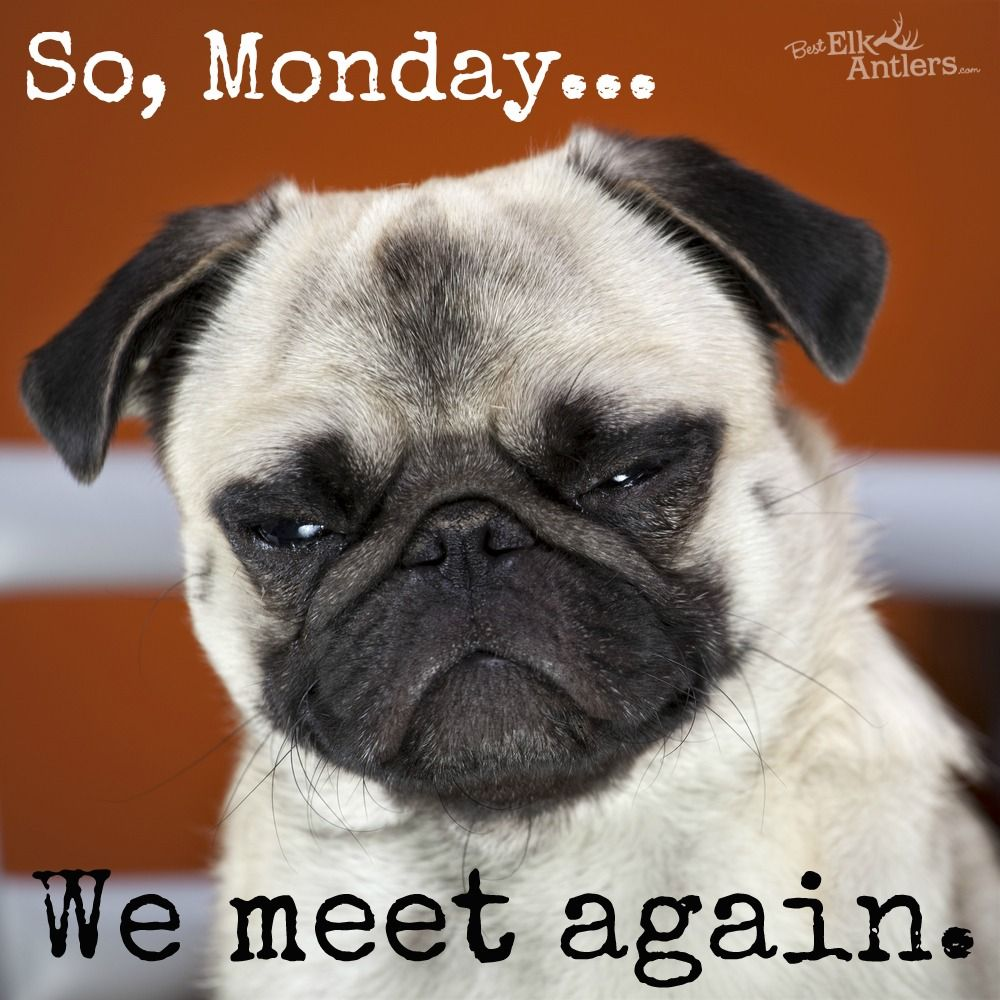We meet again... Monday dog funny Funny Animals