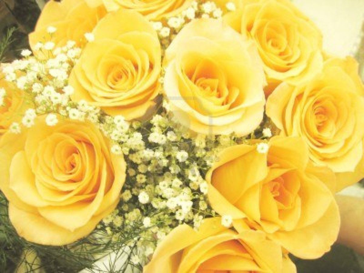 Beautiful bouquet of yellow roses with baby breath Stock