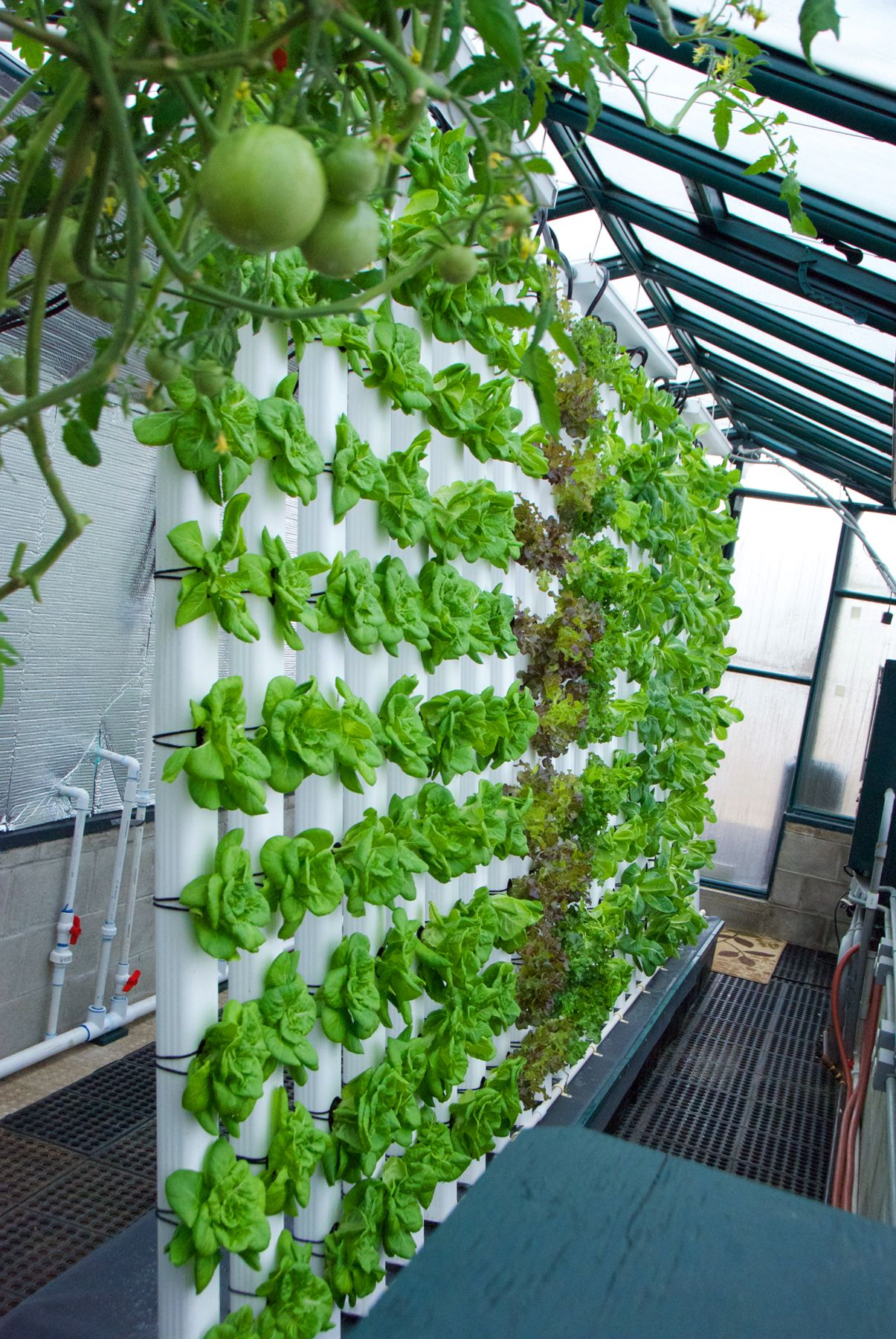 Our 80º Vertical Aquaponics System is all about saving