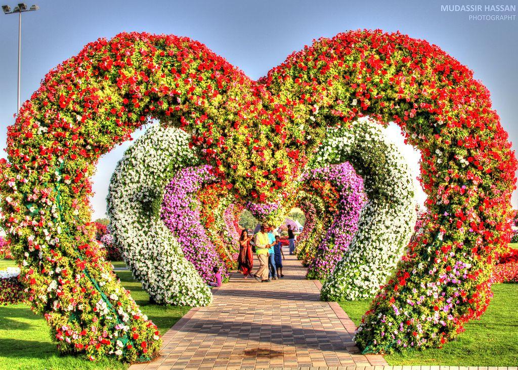 All sizes Dubai Miracle Garden Flickr Photo Sharing