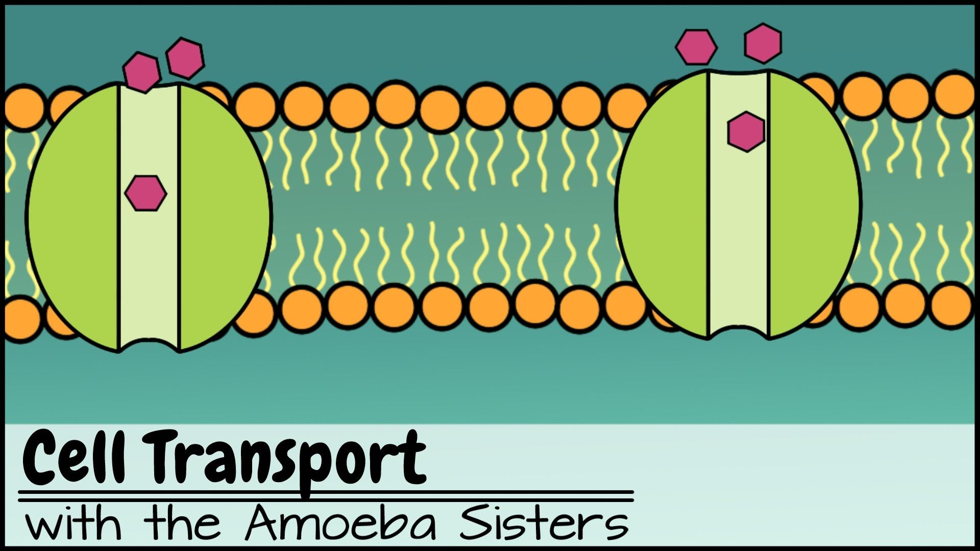 Cell Transport Explore The Types Of Passive And Active