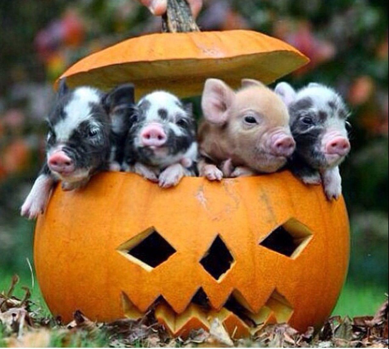 Happy Halloween! Pumpkin fun! Yes....I love it
