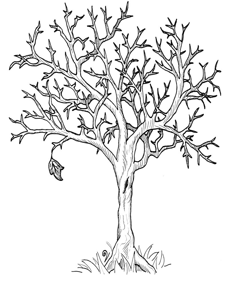 Autumn Fall Tree Without Leaves Coloring Page DOVER
