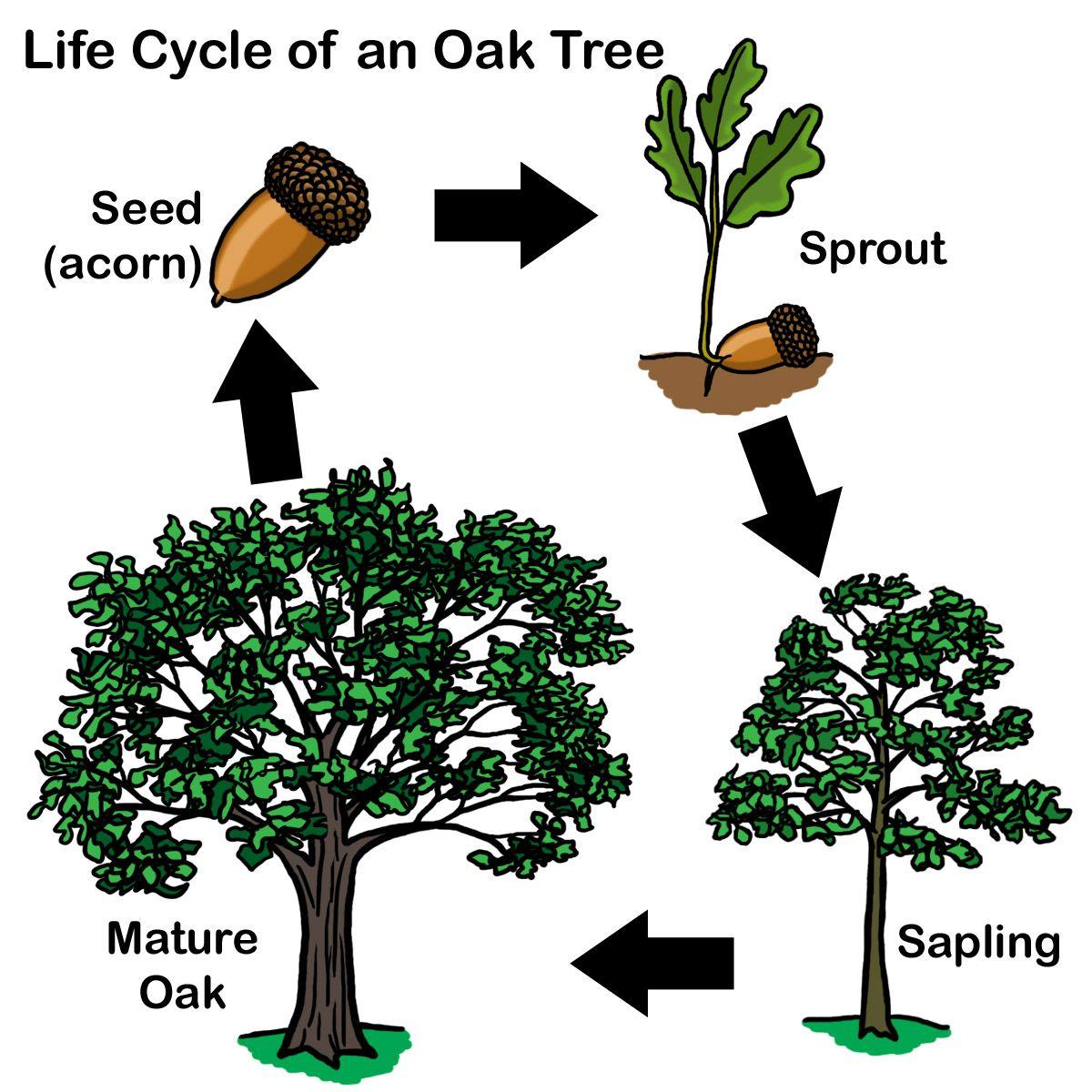 Trees Of Worksheet
