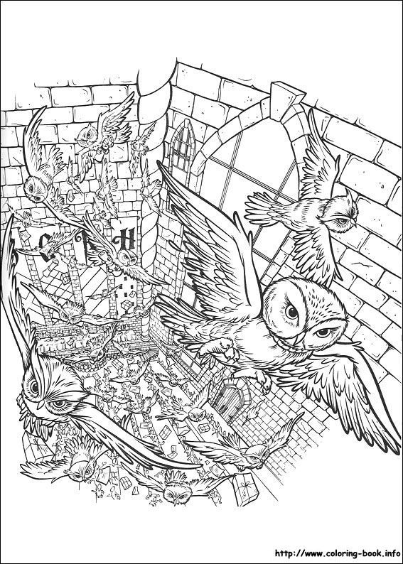 Harry Potter Coloring Picture Baby Pinterest Eulen