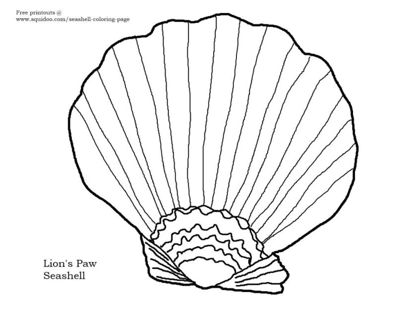 colorful pictures of seashells  new free coloring page