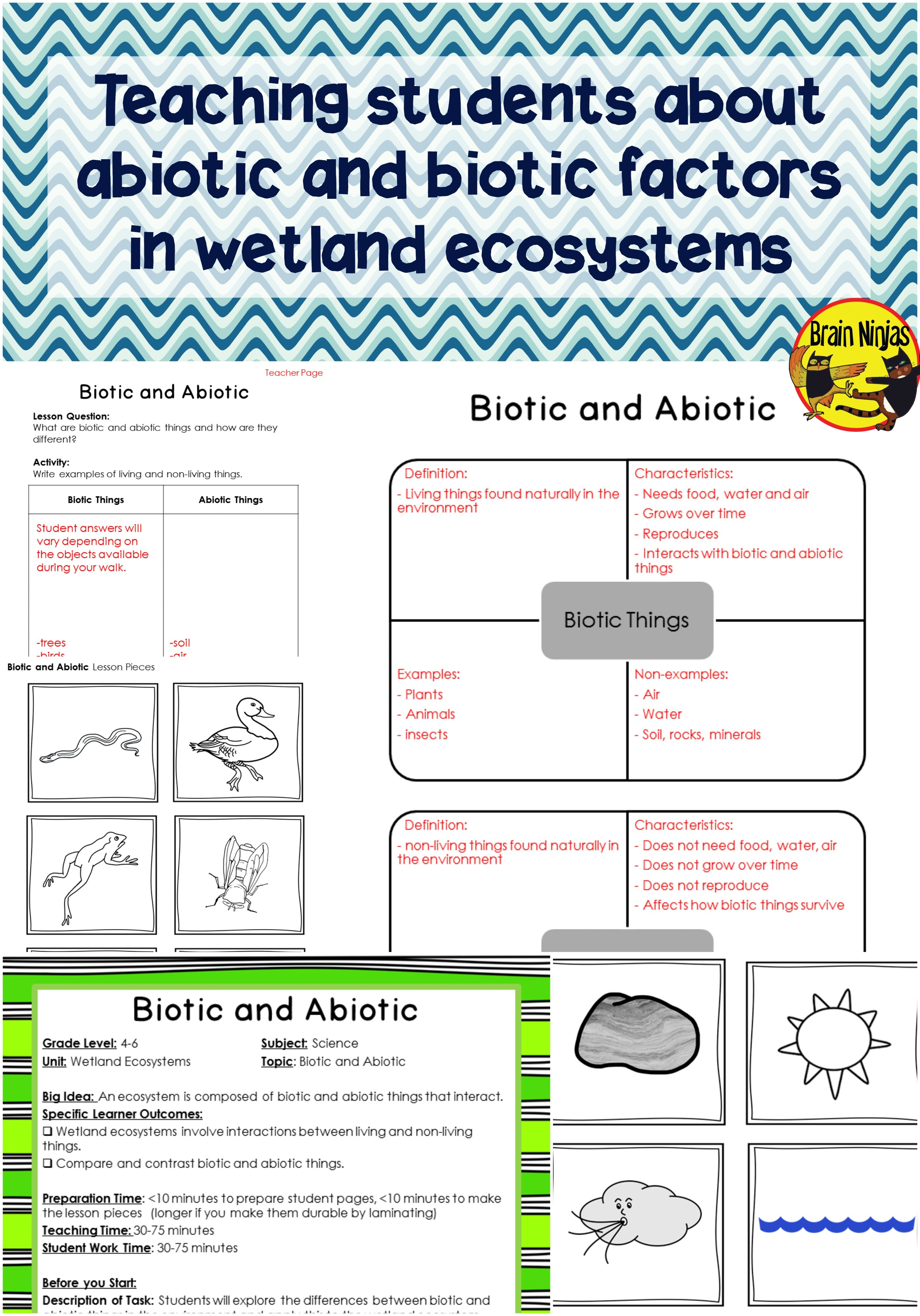Wetlands Biotic And Abiotic