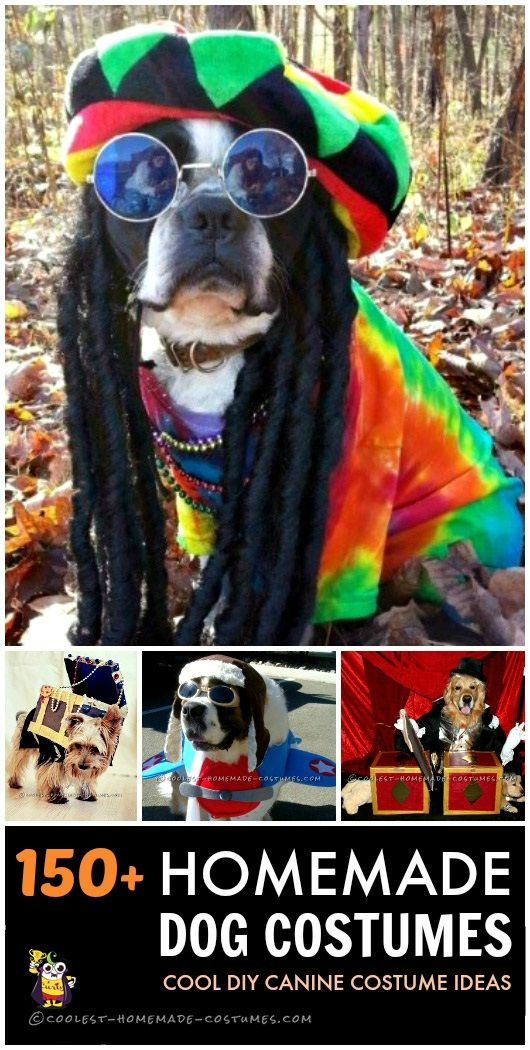 Pet Dog Costumes 3 Homemade dog and Costumes