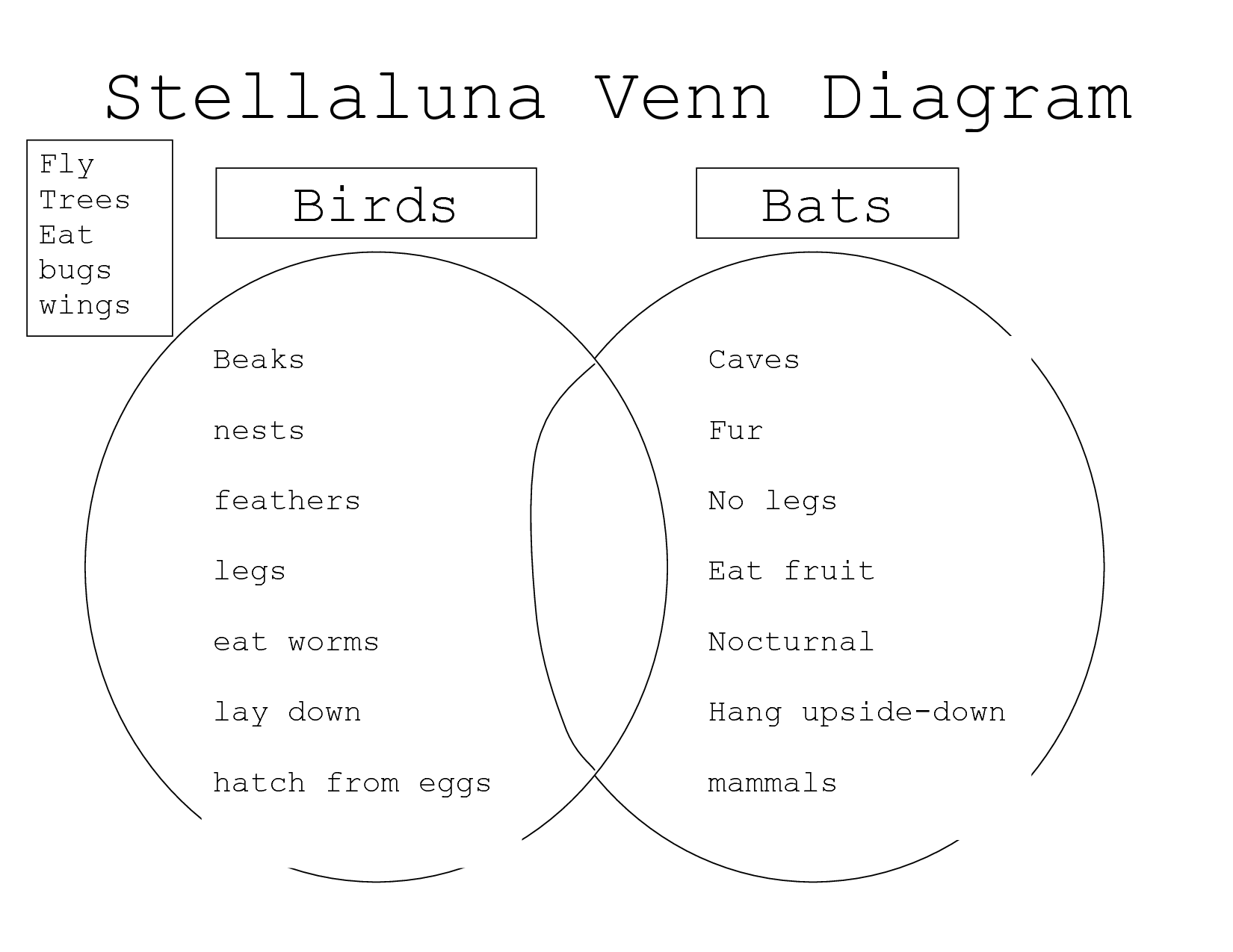 Comparing Bats And Stellaluna