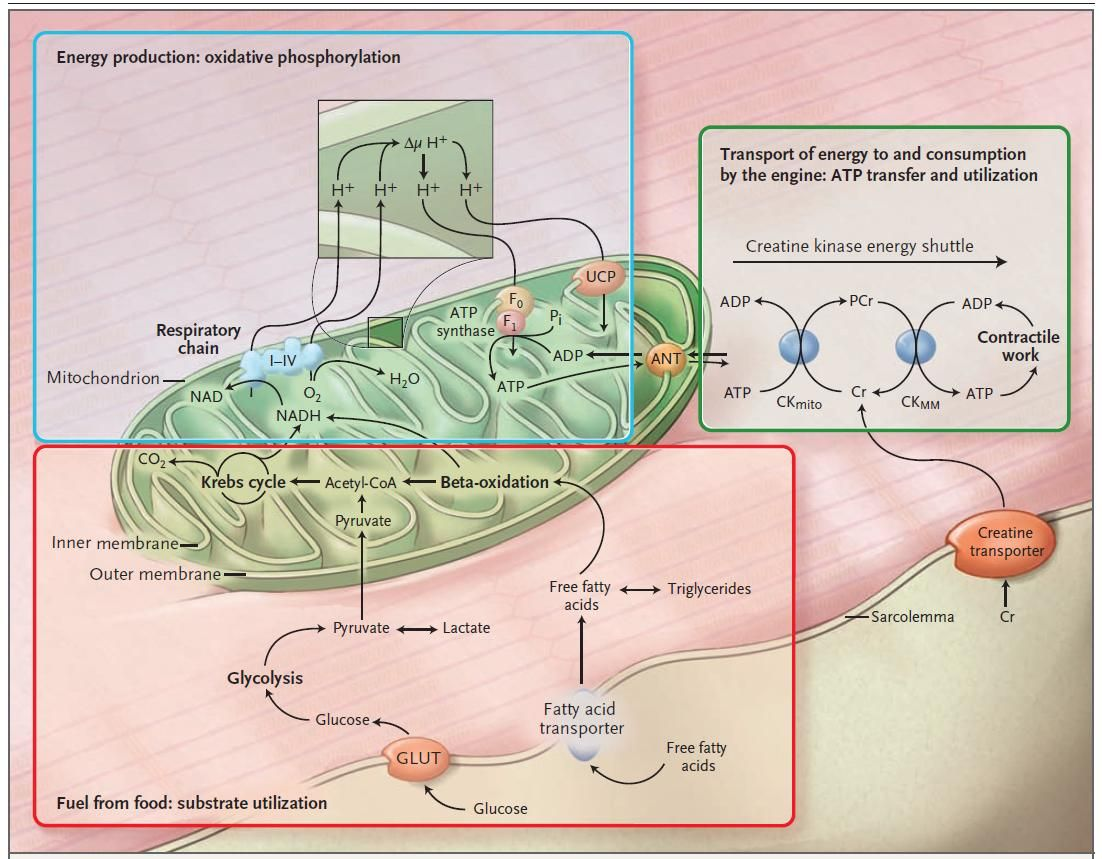 Good Overview Of Mitochondrial Metabolism From Some Odd