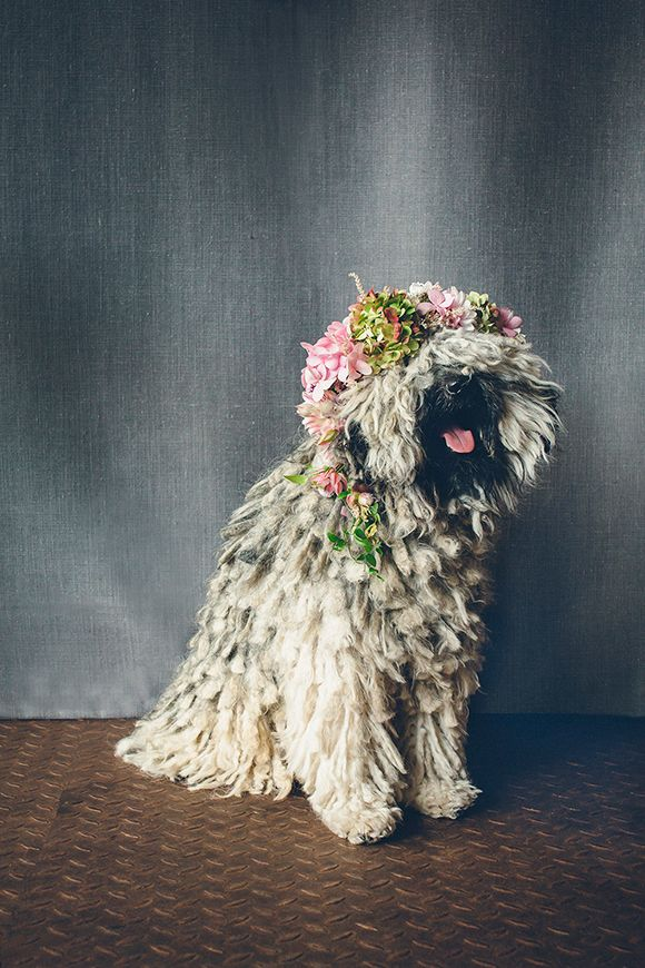 a cute pup with a floral crown! Critters & Creatures