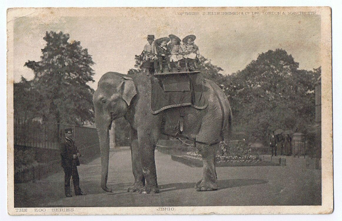 The World's Largest Elephant Jingo at the London zoo