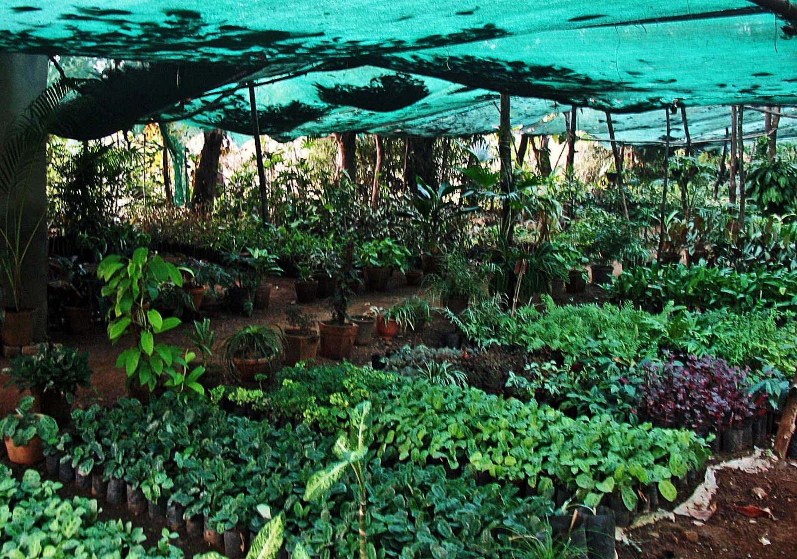 Establishing and managing plants nursery in India http