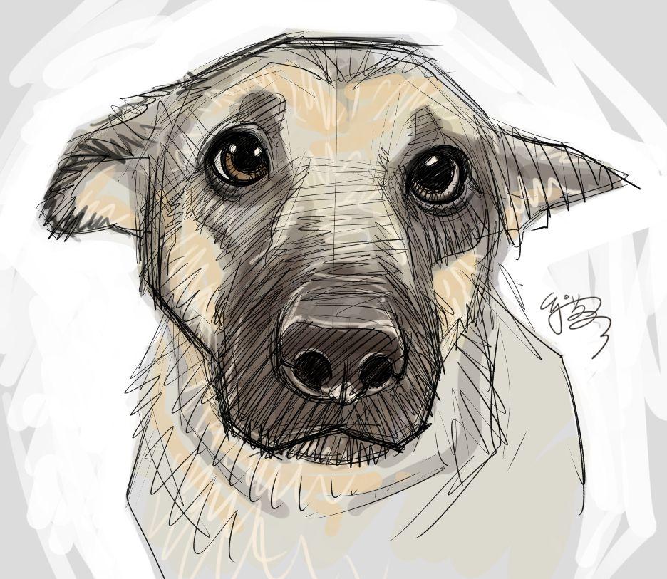Puppyeyes by EJSu on DeviantArt ★ Find more at http
